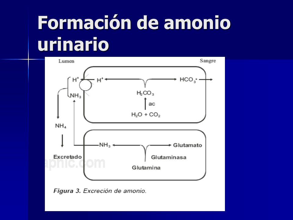 Mecanismo de reabsorción de HCO3