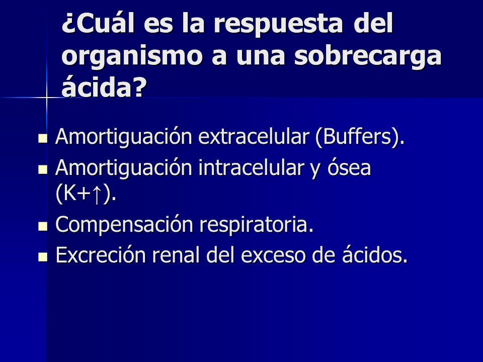 Causa de perdida de HCO3 por orina ATR tipo I o distal (trastorno en la excreción de H) ATR tipo I o distal (trastorno en la excreción de H) ATR II o proximal (déficit en la reabsorción del HCO3 filtrado) ATR II o proximal (déficit en la reabsorción del HCO3 filtrado) Síndrome de Fanconi Síndrome de Fanconi Acetazolamida.