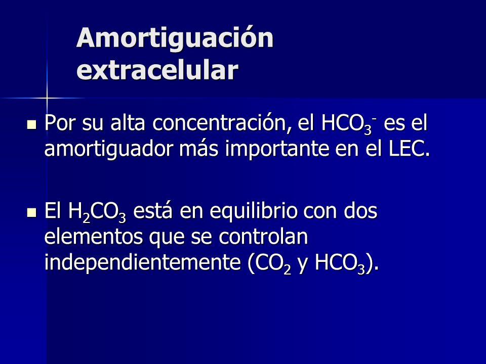 Amortiguación extracelular Por su alta concentración, el HCO 3 - es el amortiguador más importante en el LEC.