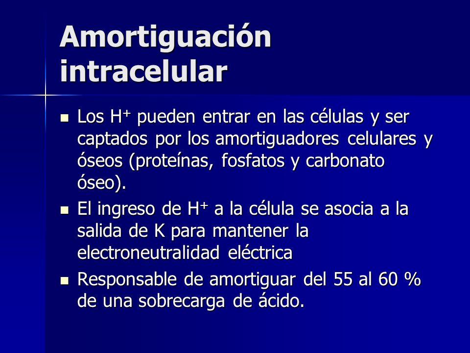 Amortiguación intracelular Los H + pueden entrar en las células y ser captados por los amortiguadores celulares y óseos (proteínas, fosfatos y carbonato óseo).