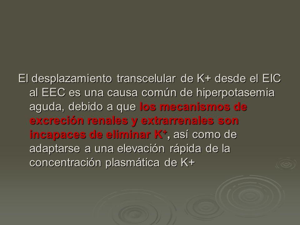 El desplazamiento transcelular de K+ desde el EIC al EEC es una causa común de hiperpotasemia aguda, debido a que los mecanismos de excreción renales