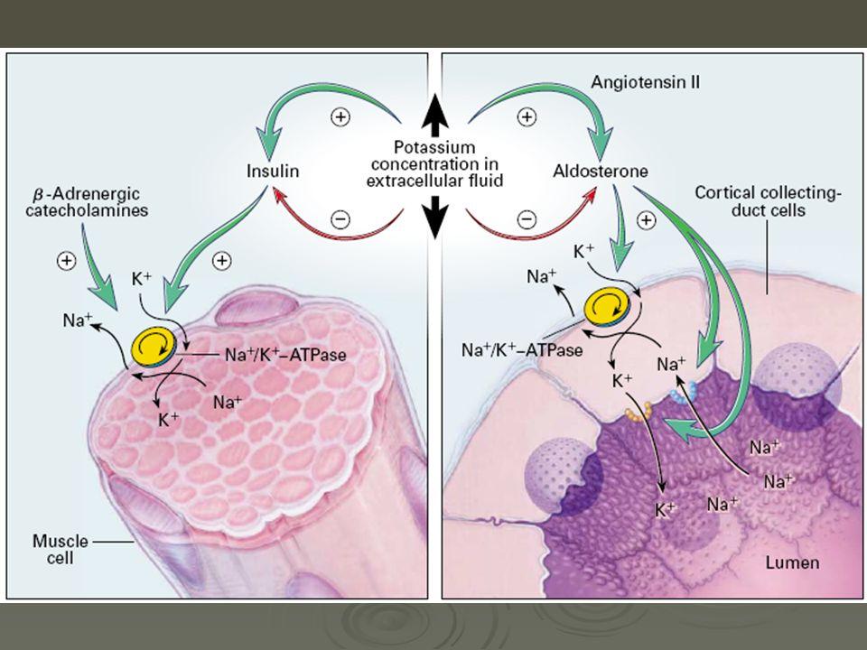Tratamiento 3-Fármacos que producen redistribución y estabilidad de membrana Bicarbonato de Sodio 50-100 meq IV en infusión lenta (en 20-30 minutos) 50-100 meq IV en infusión lenta (en 20-30 minutos) Puede repetirse a los 30 minutos Puede repetirse a los 30 minutos Aumenta el PH, por lo que disminuye el K + extracelular Aumenta el PH, por lo que disminuye el K + extracelular Estabiliza membrana plasmática Estabiliza membrana plasmática Especialmente indicado en hiperpotasemia y acidosis metabólica Especialmente indicado en hiperpotasemia y acidosis metabólica
