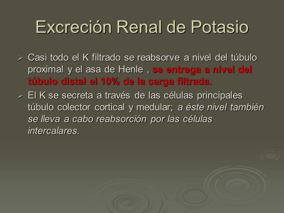 Excreción Renal de Potasio Casi todo el K filtrado se reabsorve a nivel del túbulo proximal y el asa de Henle, se entrega a nivel del túbulo distal el