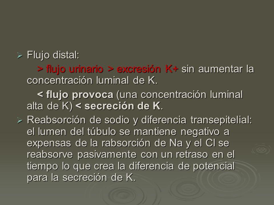 Flujo distal: Flujo distal: > flujo urinario > excresión K+ sin aumentar la concentración luminal de K. > flujo urinario > excresión K+ sin aumentar l