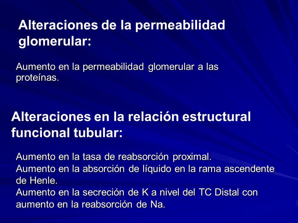 Alteraciones de la permeabilidad glomerular: Alteraciones en la relación estructural funcional tubular: Aumento en la permeabilidad glomerular a las p