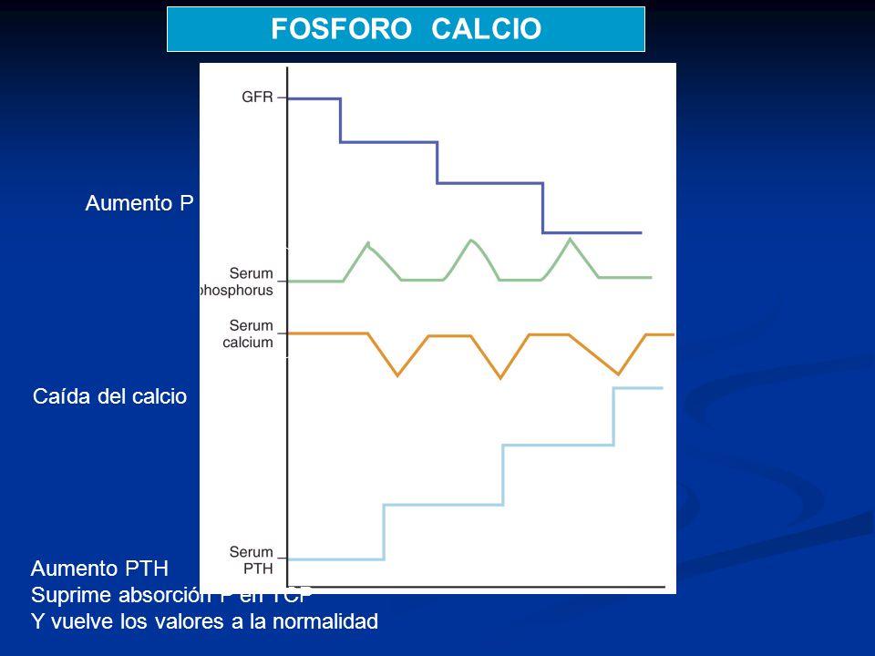 Aumento P Caída del calcio Aumento PTH Suprime absorción P en TCP Y vuelve los valores a la normalidad FOSFORO CALCIO