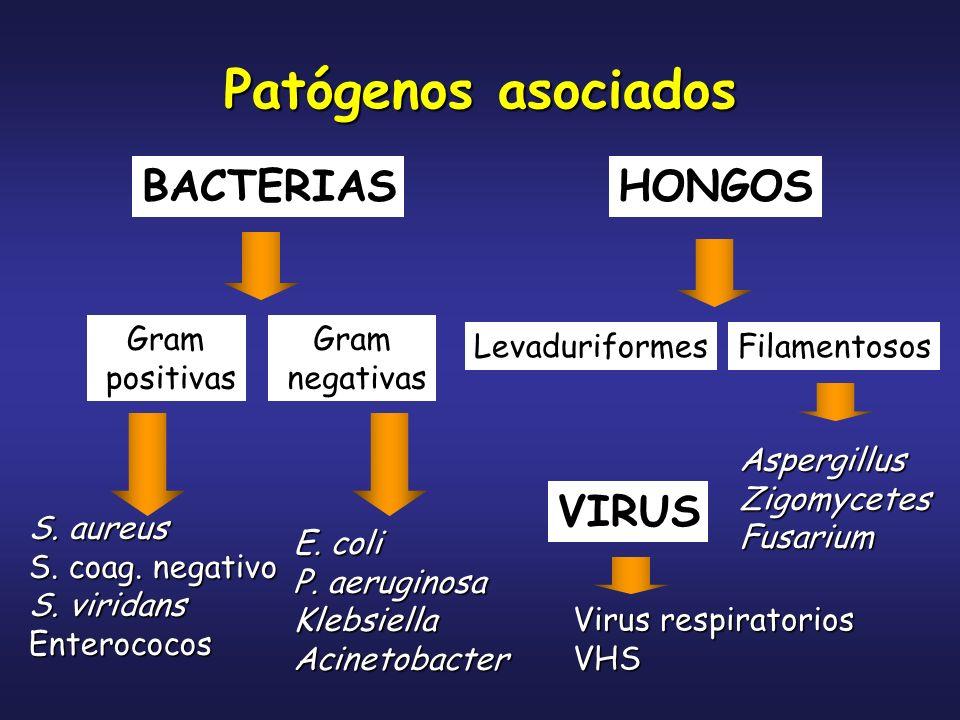BACTERIASHONGOS Gram positivas Gram negativas S. aureus S. coag. negativo S. viridans Enterococos E. coli P. aeruginosa KlebsiellaAcinetobacter Levadu
