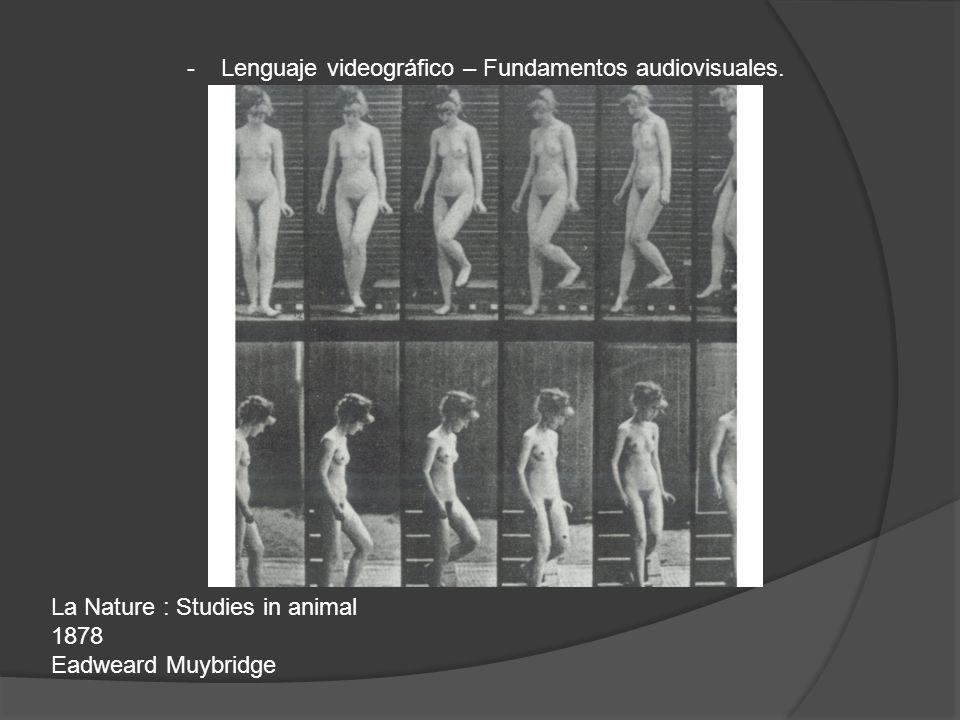 La Nature : Studies in animal 1878 Eadweard Muybridge - Lenguaje videográfico – Fundamentos audiovisuales.