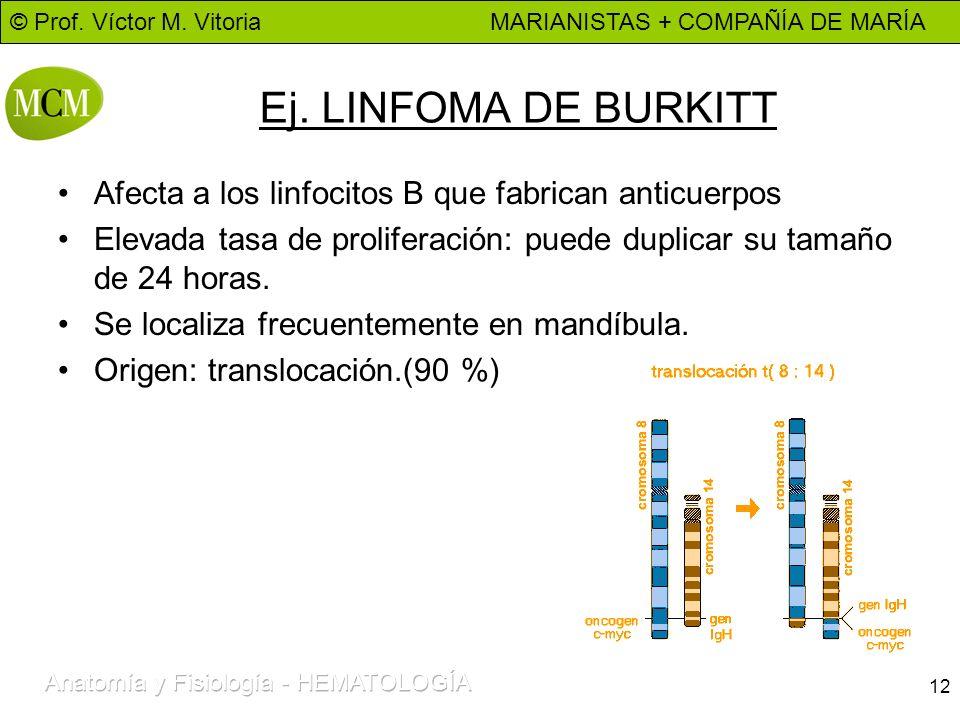 © Prof. Víctor M. Vitoria MARIANISTAS + COMPAÑÍA DE MARÍA 12 Ej. LINFOMA DE BURKITT Afecta a los linfocitos B que fabrican anticuerpos Elevada tasa de