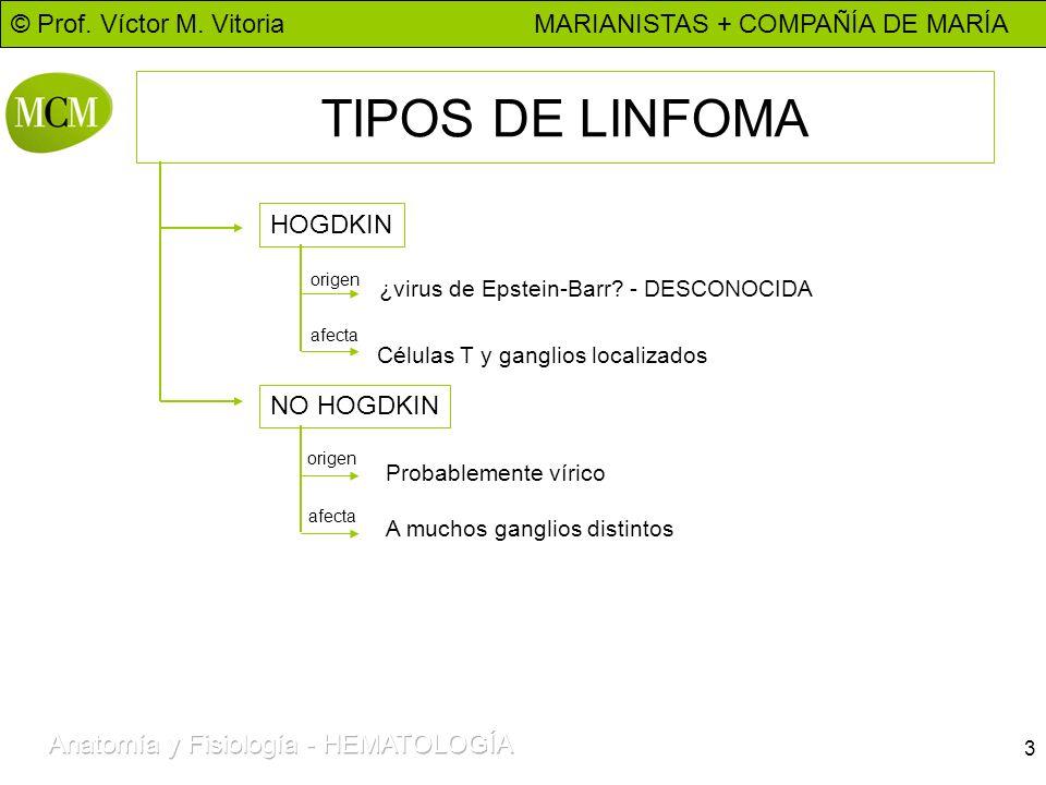 © Prof. Víctor M. Vitoria MARIANISTAS + COMPAÑÍA DE MARÍA 3 TIPOS DE LINFOMA HOGDKIN ¿virus de Epstein-Barr? - DESCONOCIDA Células T y ganglios locali