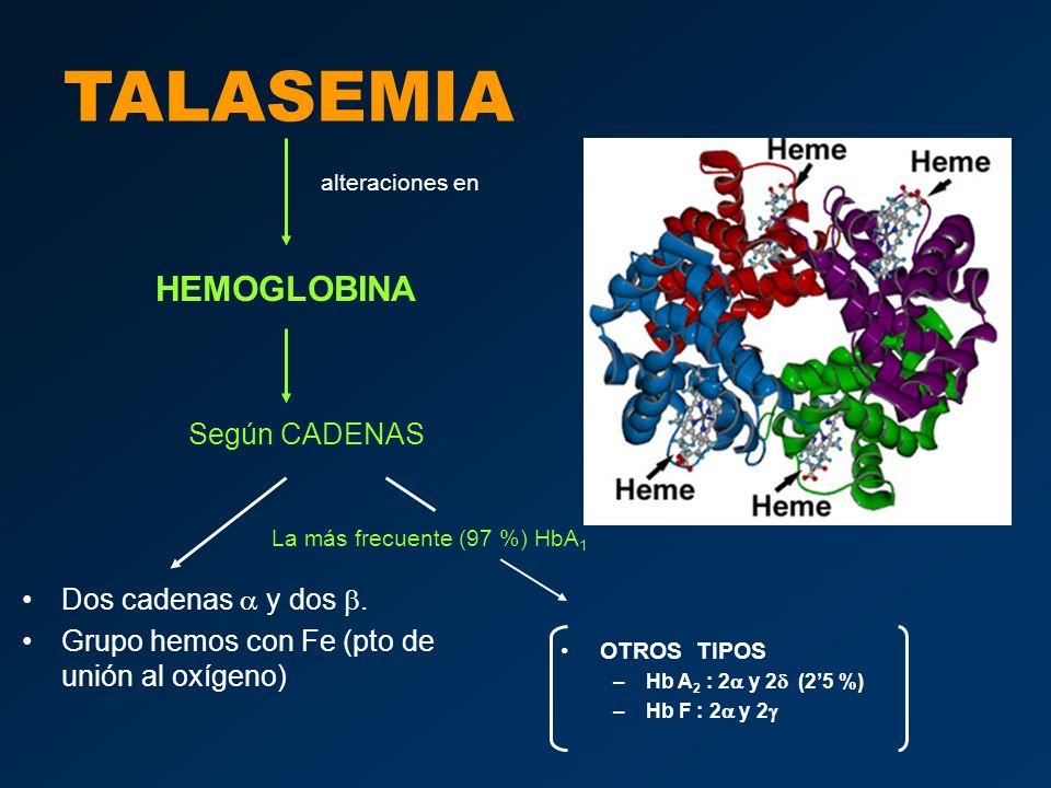 TALASEMIA sus causas son DELECCIÓN MUTACIÓN PUNTUAL TALASEMIA ALFA (fallo cadena ) –CROMOSOMA 16 –2 genes por cromosoma –4 genes TALASEMIA BETA (fallo cadena ) –CROMOSOMA 11 –2 genes –Tipos: Mayor (Anemia de Cooley) Intermedia Minor ALTERACIÓN EN HEMOGLOBINA –Hemolisis –Microcitosis –… produce