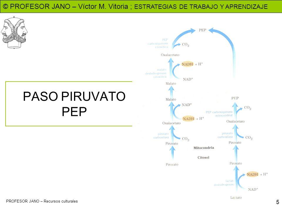 © PROFESOR JANO – Víctor M. Vitoria ; ESTRATEGIAS DE TRABAJO Y APRENDIZAJE PROFESOR JANO – Recursos culturales 5 PASO PIRUVATO PEP