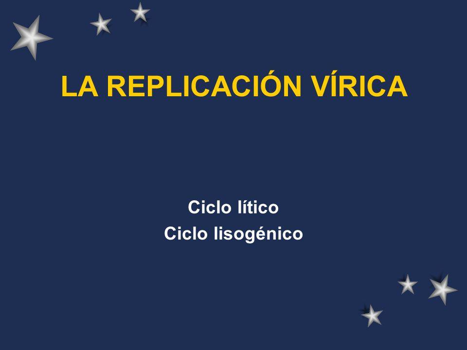 LA REPLICACIÓN VÍRICA Ciclo lítico Ciclo lisogénico