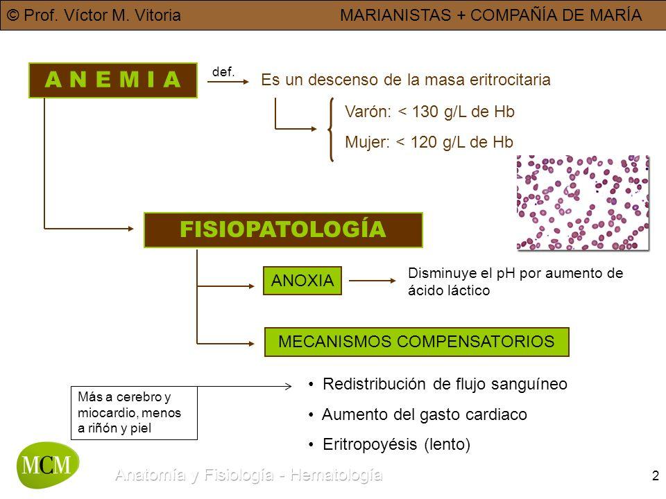 © Prof. Víctor M. VitoriaMARIANISTAS + COMPAÑÍA DE MARÍA 2 A N E M I A Es un descenso de la masa eritrocitaria def. Varón: < 130 g/L de Hb Mujer: < 12