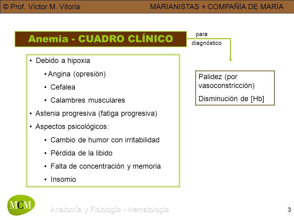 © Prof. Víctor M. VitoriaMARIANISTAS + COMPAÑÍA DE MARÍA 3 Anemia - CUADRO CLÍNICO Debido a hipoxia Angina (opresión) Cefalea Calambres musculares Ast