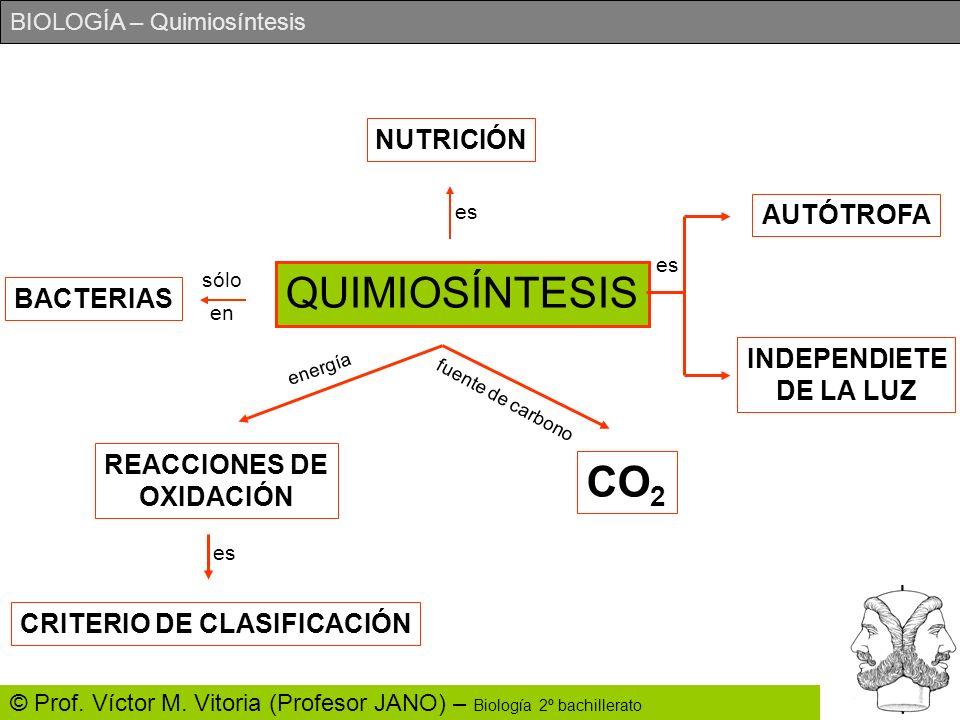 BIOLOGÍA – Quimiosíntesis © Prof. Víctor M. Vitoria (Profesor JANO) – Biología 2º bachillerato QUIMIOSÍNTESIS NUTRICIÓN BACTERIAS AUTÓTROFA INDEPENDIE