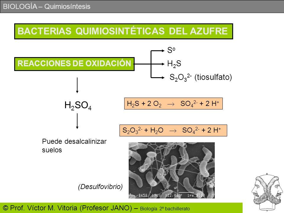 BIOLOGÍA – Quimiosíntesis © Prof. Víctor M. Vitoria (Profesor JANO) – Biología 2º bachillerato BACTERIAS QUIMIOSINTÉTICAS DEL AZUFRE REACCIONES DE OXI
