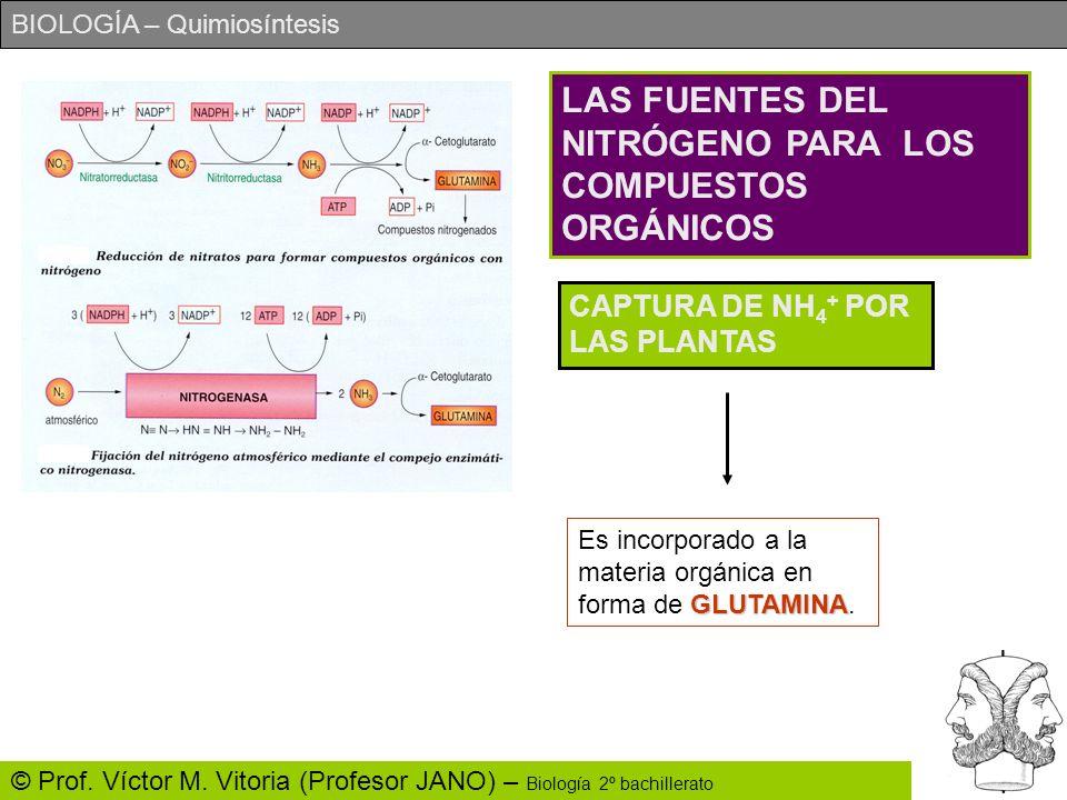 BIOLOGÍA – Quimiosíntesis © Prof. Víctor M. Vitoria (Profesor JANO) – Biología 2º bachillerato LAS FUENTES DEL NITRÓGENO PARA LOS COMPUESTOS ORGÁNICOS