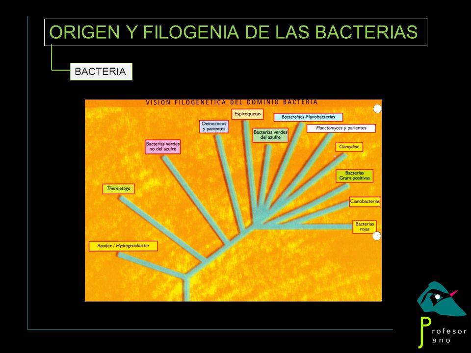 ORIGEN Y FILOGENIA DE LAS BACTERIAS BACTERIA