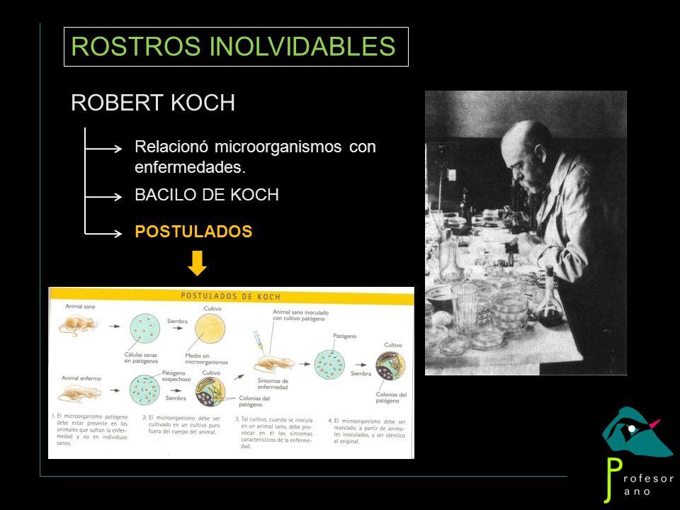ROSTROS INOLVIDABLES ROBERT KOCH Relacionó microorganismos con enfermedades. BACILO DE KOCH POSTULADOS
