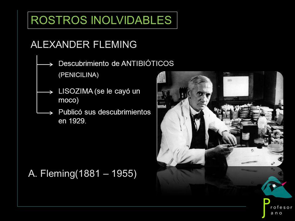 ROSTROS INOLVIDABLES ALEXANDER FLEMING Descubrimiento de ANTIBIÓTICOS (PENICILINA) LISOZIMA (se le cayó un moco) Publicó sus descubrimientos en 1929.