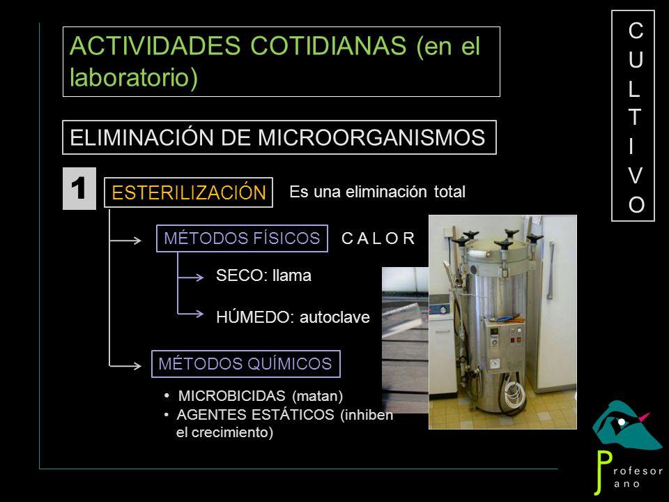 ACTIVIDADES COTIDIANAS (en el laboratorio) ELIMINACIÓN DE MICROORGANISMOS ESTERILIZACIÓN 1 Es una eliminación total MÉTODOS FÍSICOS C A L O R SECO: ll