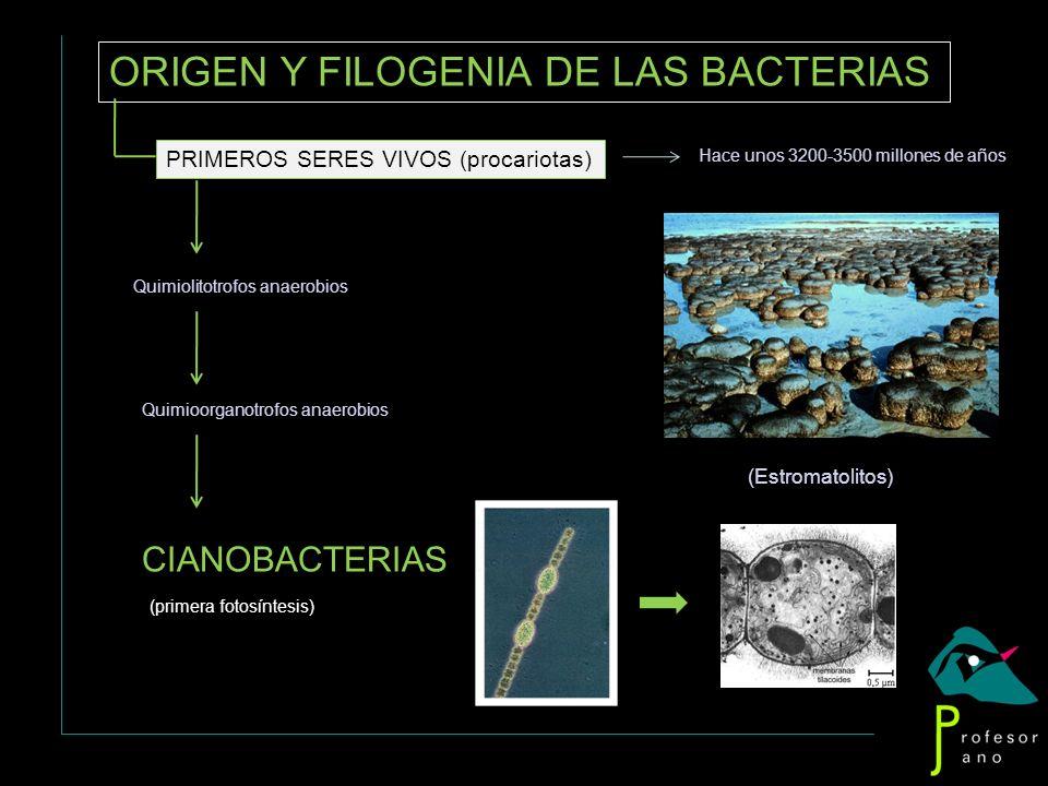 ORIGEN Y FILOGENIA DE LAS BACTERIAS PRIMEROS SERES VIVOS (procariotas) Hace unos 3200-3500 millones de años (Estromatolitos) Quimiolitotrofos anaerobi