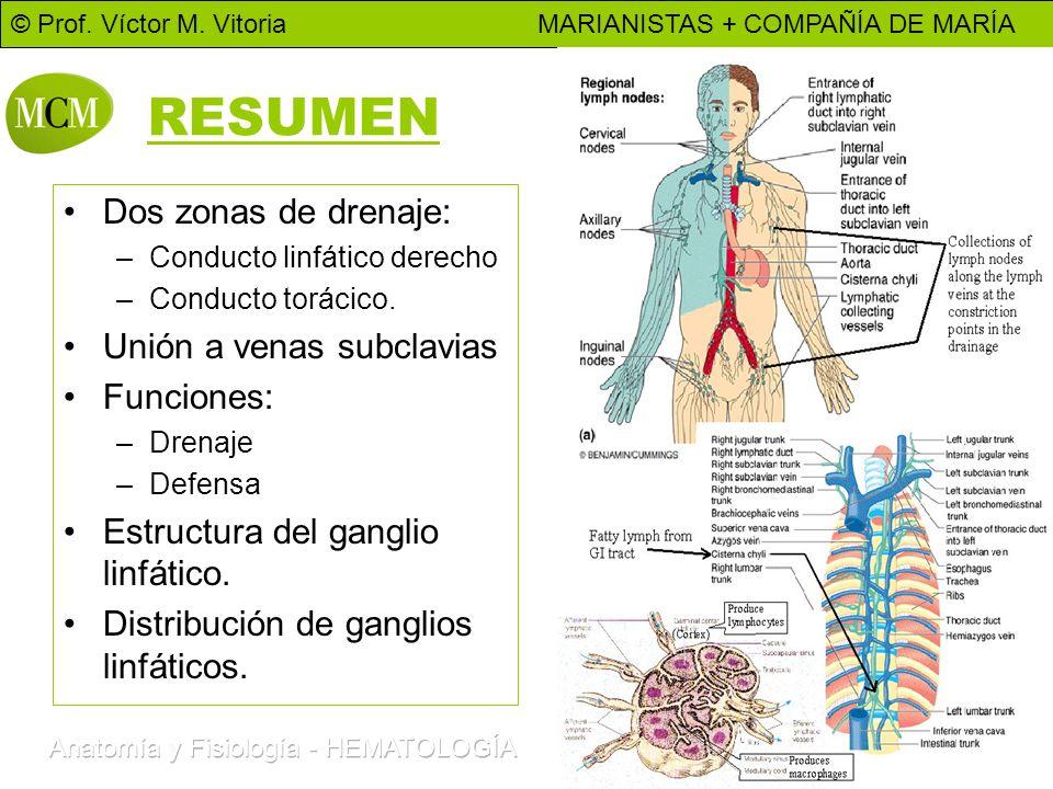 © Prof. Víctor M. Vitoria MARIANISTAS + COMPAÑÍA DE MARÍA 15 RESUMEN Dos zonas de drenaje: –Conducto linfático derecho –Conducto torácico. Unión a ven
