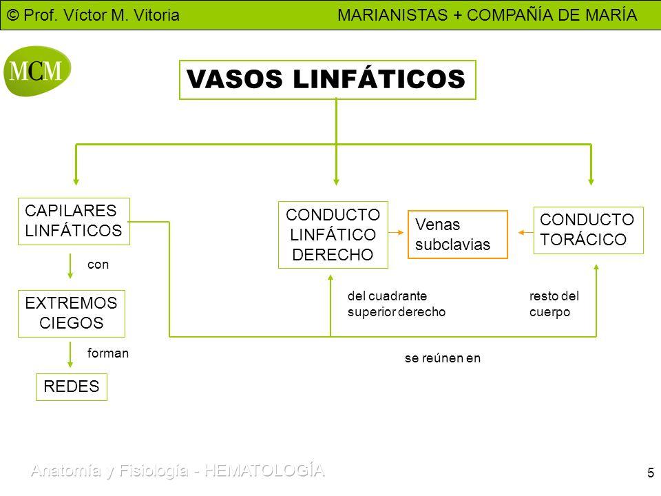 © Prof. Víctor M. Vitoria MARIANISTAS + COMPAÑÍA DE MARÍA 5 VASOS LINFÁTICOS CAPILARES LINFÁTICOS EXTREMOS CIEGOS REDES CONDUCTO LINFÁTICO DERECHO CON