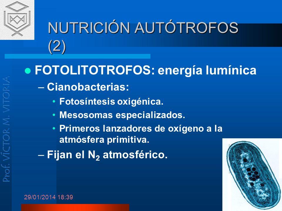 29/01/2014 18:41 3 NUTRICIÓN AUTÓTROFOS (2) FOTOLITOTROFOS: energía lumínica –Cianobacterias: Fotosíntesis oxigénica. Mesosomas especializados. Primer