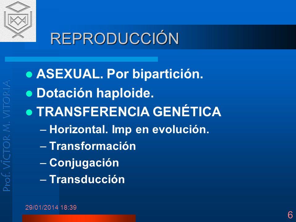 29/01/2014 18:41 6 REPRODUCCIÓN ASEXUAL. Por bipartición. Dotación haploide. TRANSFERENCIA GENÉTICA –Horizontal. Imp en evolución. –Transformación –Co