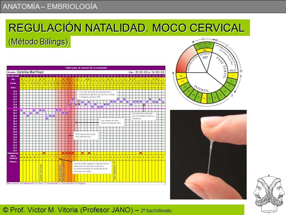 ANATOMÍA – EMBRIOLOGÍA © Prof. Víctor M. Vitoria (Profesor JANO) – 2º bachillerato REGULACIÓN NATALIDAD. MOCO CERVICAL (Método Billings)