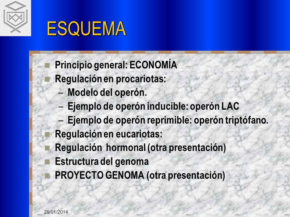 29/01/2014 ESQUEMA Principio general: ECONOMÍA Regulación en procariotas: – Modelo del operón. – Ejemplo de operón inducible: operón LAC – Ejemplo de