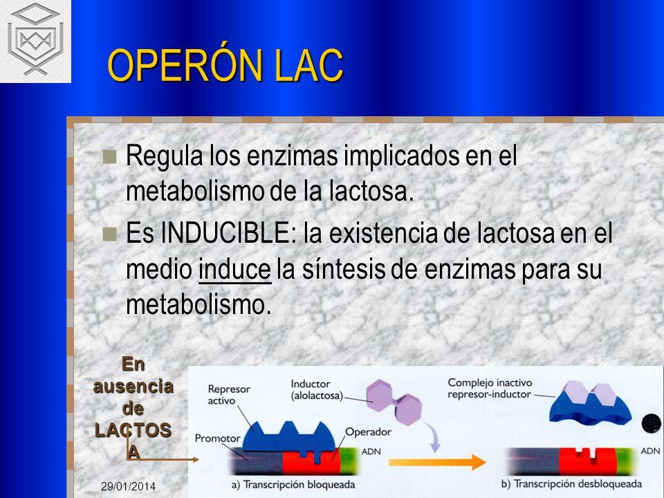 29/01/2014 OPERÓN LAC Regula los enzimas implicados en el metabolismo de la lactosa. Es INDUCIBLE: la existencia de lactosa en el medio induce la sínt