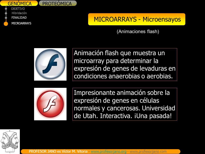 PROFESOR JANO es Víctor M. Vitoria - www.profesorjano.org - www.profesorjano.comwww.profesorjano.org GENÓMICAPROTEÓMICA OBJETIVO FINALIDAD MICROARRAYS