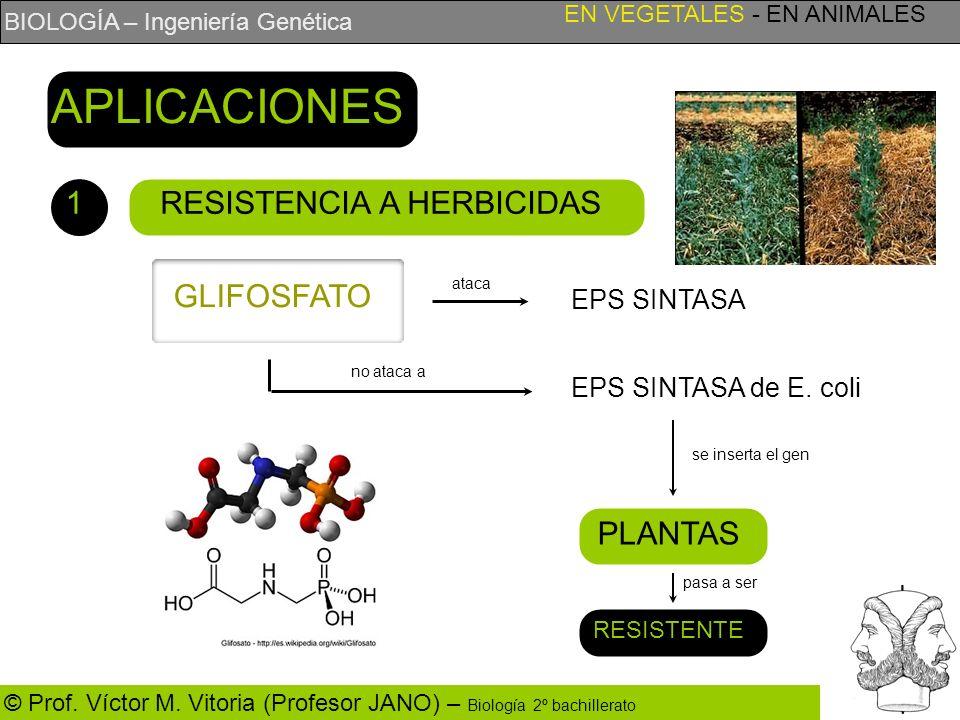 BIOLOGÍA – Ingeniería Genética © Prof. Víctor M. Vitoria (Profesor JANO) – Biología 2º bachillerato RESISTENCIA A HERBICIDAS EN VEGETALES - EN ANIMALE