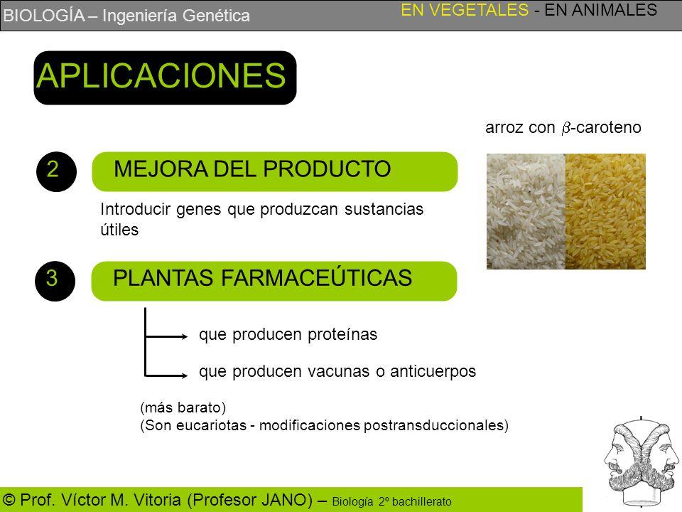 BIOLOGÍA – Ingeniería Genética © Prof. Víctor M. Vitoria (Profesor JANO) – Biología 2º bachillerato MEJORA DEL PRODUCTO EN VEGETALES - EN ANIMALES APL