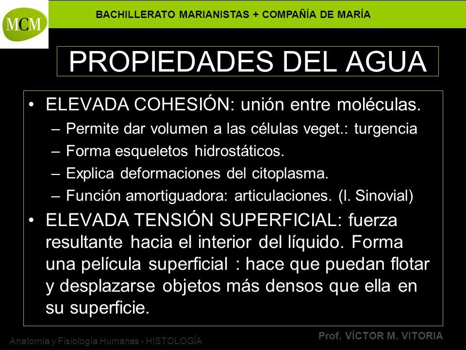 BACHILLERATO MARIANISTAS + COMPAÑÍA DE MARÍA Prof. VÍCTOR M. VITORIA Anatomía y Fisiología Humanas - HISTOLOGÍA PROPIEDADES DEL AGUA ELEVADA COHESIÓN: