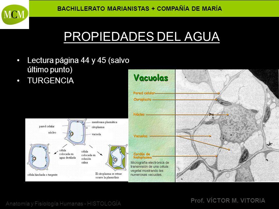 BACHILLERATO MARIANISTAS + COMPAÑÍA DE MARÍA Prof. VÍCTOR M. VITORIA Anatomía y Fisiología Humanas - HISTOLOGÍA PROPIEDADES DEL AGUA Lectura página 44