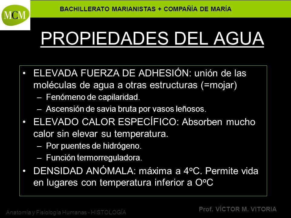 BACHILLERATO MARIANISTAS + COMPAÑÍA DE MARÍA Prof. VÍCTOR M. VITORIA Anatomía y Fisiología Humanas - HISTOLOGÍA PROPIEDADES DEL AGUA ELEVADA FUERZA DE