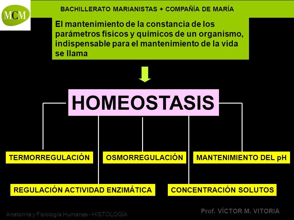 BACHILLERATO MARIANISTAS + COMPAÑÍA DE MARÍA Prof. VÍCTOR M. VITORIA Anatomía y Fisiología Humanas - HISTOLOGÍA HOMEOSTASIS El mantenimiento de la con