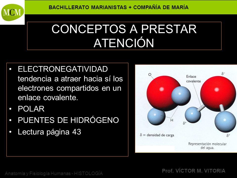 BACHILLERATO MARIANISTAS + COMPAÑÍA DE MARÍA Prof. VÍCTOR M. VITORIA Anatomía y Fisiología Humanas - HISTOLOGÍA CONCEPTOS A PRESTAR ATENCIÓN ELECTRONE