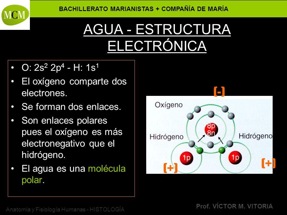 BACHILLERATO MARIANISTAS + COMPAÑÍA DE MARÍA Prof. VÍCTOR M. VITORIA Anatomía y Fisiología Humanas - HISTOLOGÍA AGUA - ESTRUCTURA ELECTRÓNICA O: 2s 2