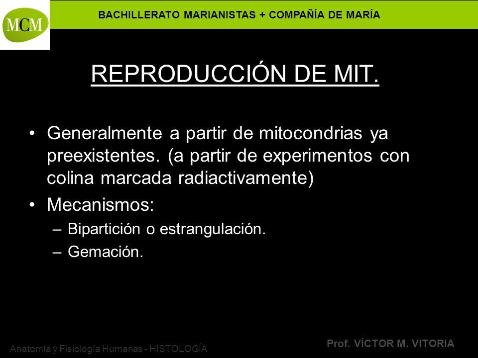 BACHILLERATO MARIANISTAS + COMPAÑÍA DE MARÍA Prof. VÍCTOR M. VITORIA Anatomía y Fisiología Humanas - HISTOLOGÍA REPRODUCCIÓN DE MIT. Generalmente a pa