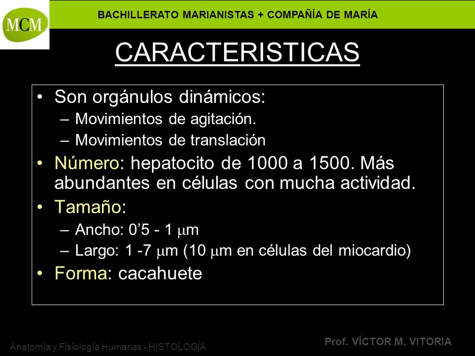 BACHILLERATO MARIANISTAS + COMPAÑÍA DE MARÍA Prof. VÍCTOR M. VITORIA Anatomía y Fisiología Humanas - HISTOLOGÍA CARACTERISTICAS Son orgánulos dinámico