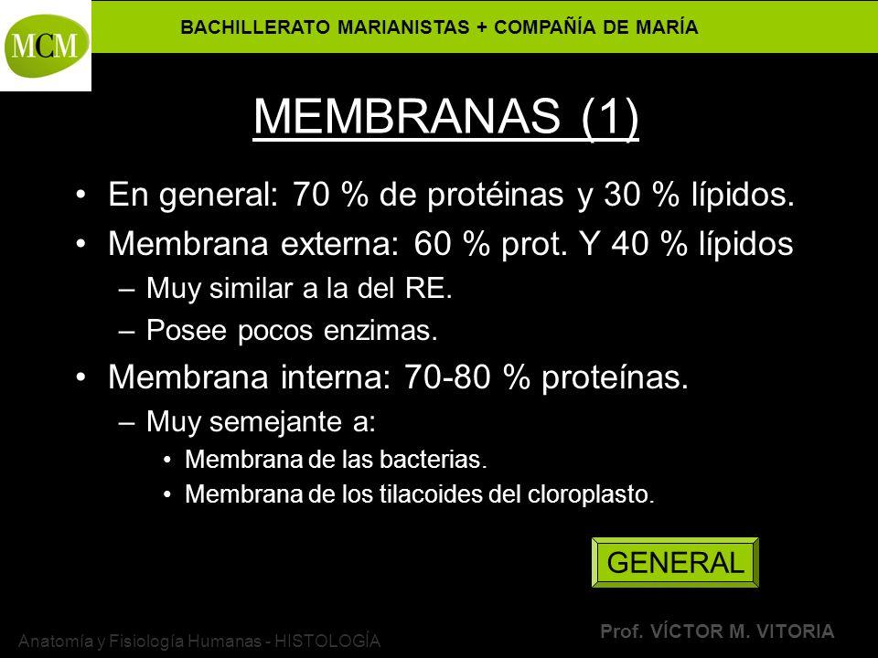 BACHILLERATO MARIANISTAS + COMPAÑÍA DE MARÍA Prof. VÍCTOR M. VITORIA Anatomía y Fisiología Humanas - HISTOLOGÍA MEMBRANAS (1) En general: 70 % de prot