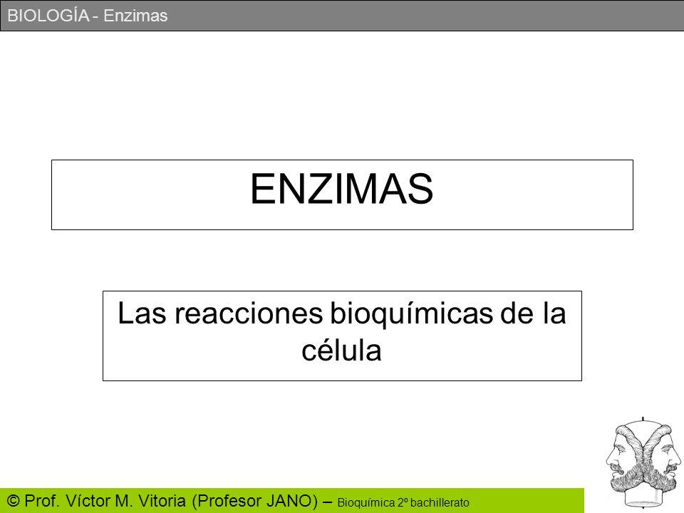 BIOLOGÍA - Enzimas © Prof. Víctor M. Vitoria (Profesor JANO) – Bioquímica 2º bachillerato ENZIMAS Las reacciones bioquímicas de la célula