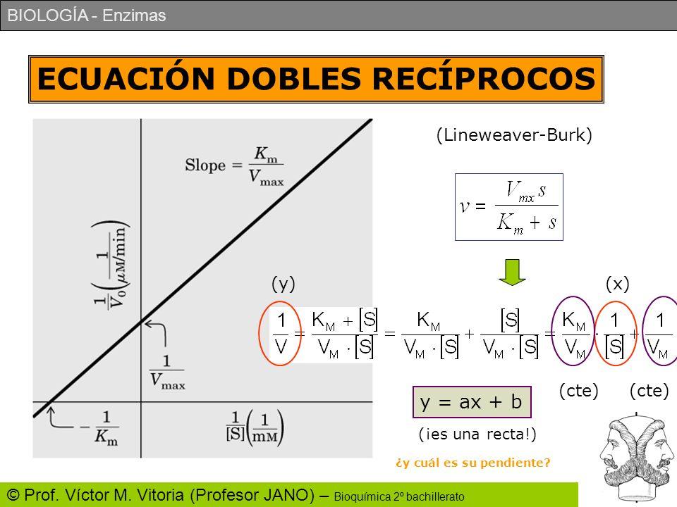 BIOLOGÍA - Enzimas © Prof. Víctor M. Vitoria (Profesor JANO) – Bioquímica 2º bachillerato ECUACIÓN DOBLES RECÍPROCOS (Lineweaver-Burk) (y)(x) (cte) y