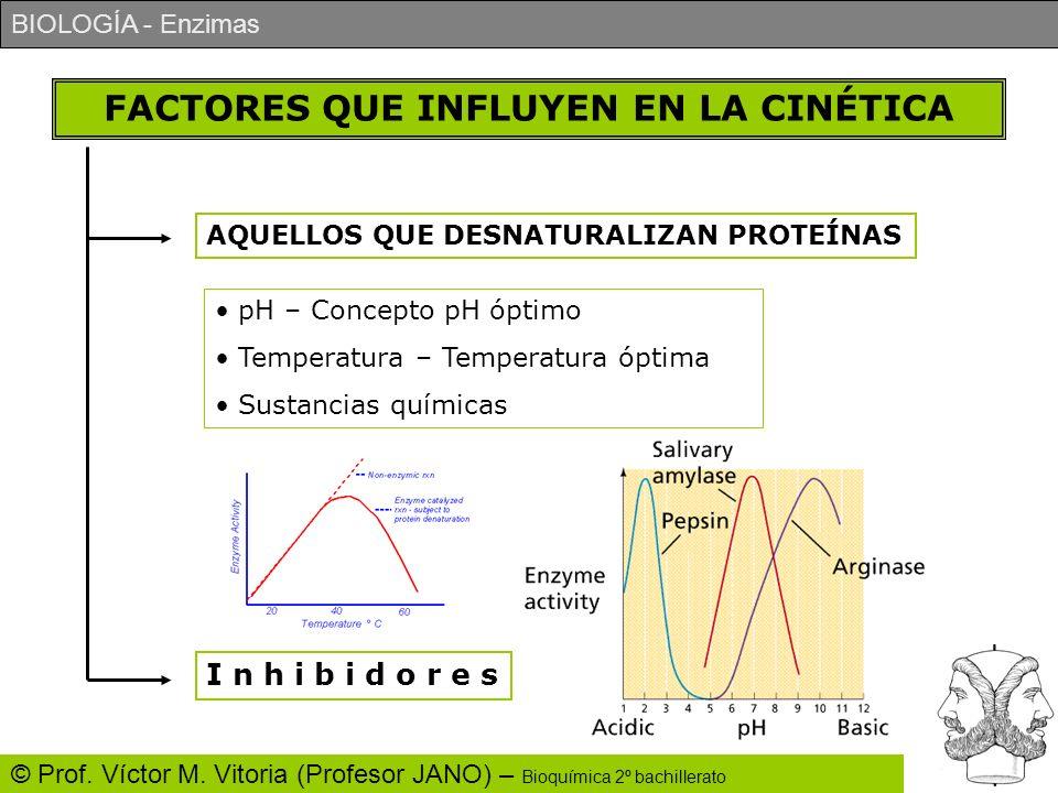 BIOLOGÍA - Enzimas © Prof. Víctor M. Vitoria (Profesor JANO) – Bioquímica 2º bachillerato FACTORES QUE INFLUYEN EN LA CINÉTICA AQUELLOS QUE DESNATURAL