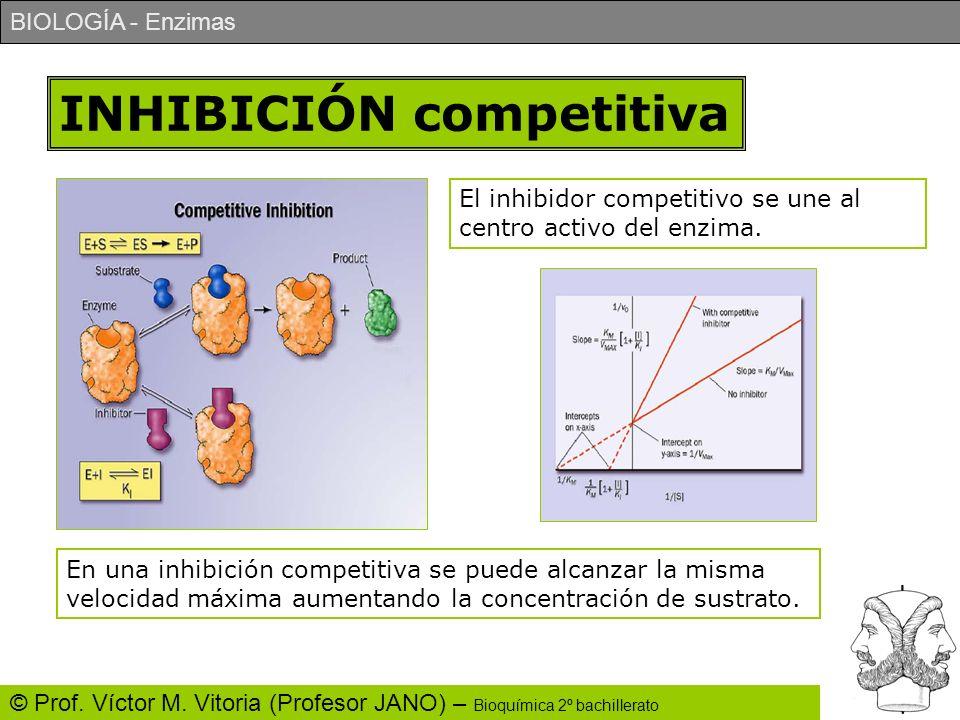 BIOLOGÍA - Enzimas © Prof. Víctor M. Vitoria (Profesor JANO) – Bioquímica 2º bachillerato INHIBICIÓN competitiva El inhibidor competitivo se une al ce
